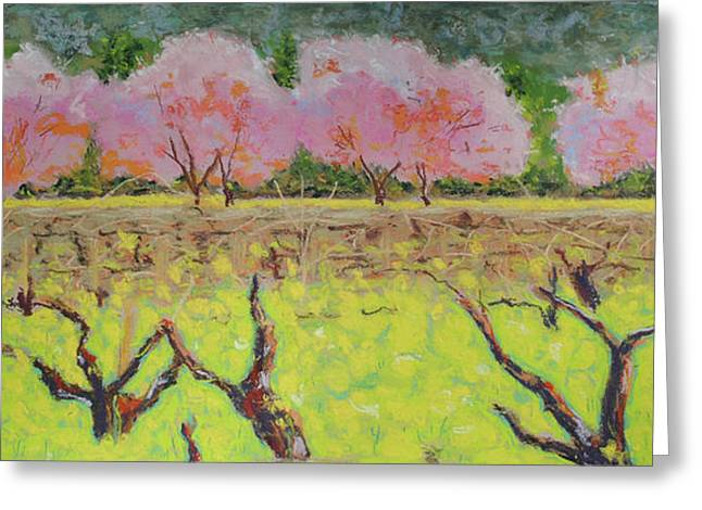 Cherry Blossoms Pastels Greeting Cards - Spring Hwy 128 Greeting Card by Dan Scannell