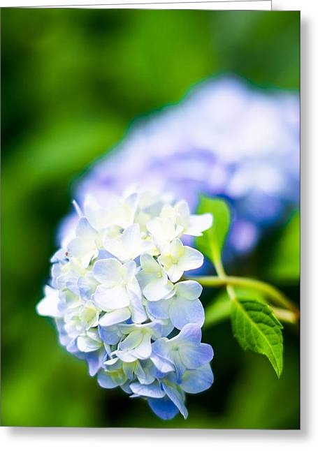 Crisp Greeting Cards - Spring Hydrangea Greeting Card by Shelby  Young