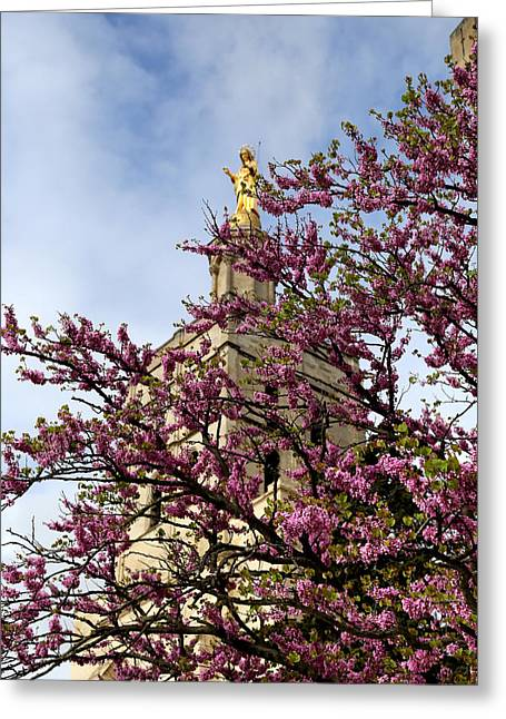 The Pope Greeting Cards - Spring In Avignon Greeting Card by Andrew Fare