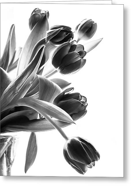 Spring In Black And White Greeting Card by Maggie Terlecki