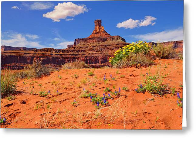 Landscape Art Greeting Cards - Spring in the Canyon Greeting Card by Greg Norrell