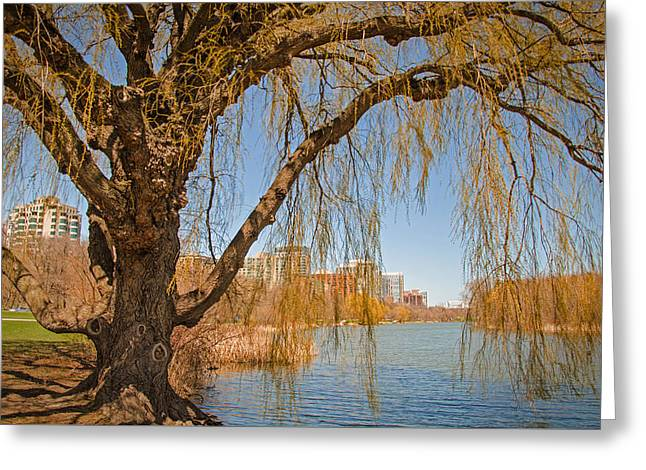 Weeping Greeting Cards - Spring In The City Greeting Card by Susan  McMenamin