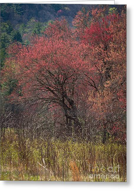 Spring In The Cove Greeting Card by Douglas Stucky