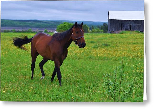 Spring In The Pasture Greeting Card by Bill Willemsen