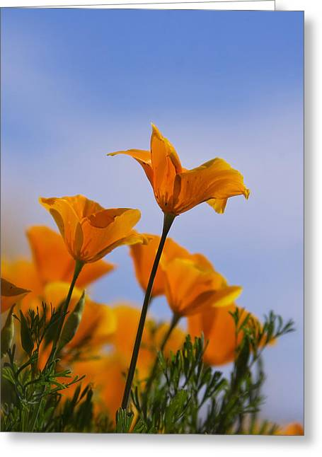 Golden Poppies Greeting Cards - Spring Is A Poppin Greeting Card by Saija  Lehtonen