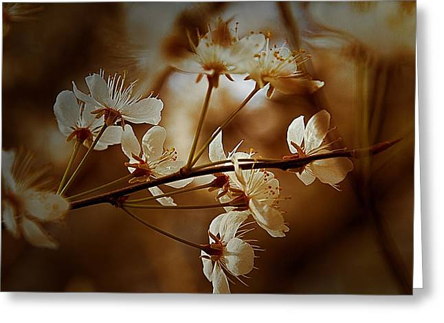 Warm Tones Greeting Cards - Spring is in the Air - Floral Landscape Greeting Card by Barry Jones