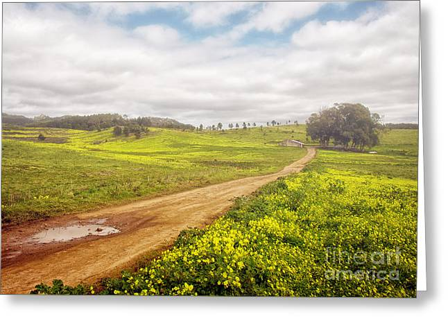 Spring Landscape Greeting Card by Carlos Caetano