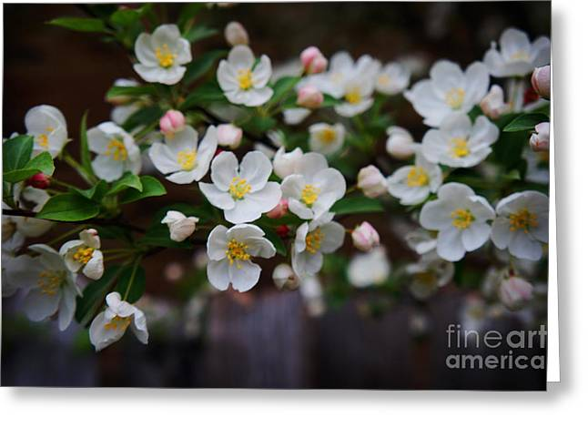 Lanscape Paintings Greeting Cards - Spring Lanscape  Greeting Card by Celestial Images
