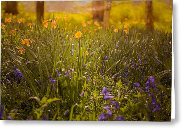 Bluebell Greeting Cards - Spring meadow Greeting Card by Chris Fletcher