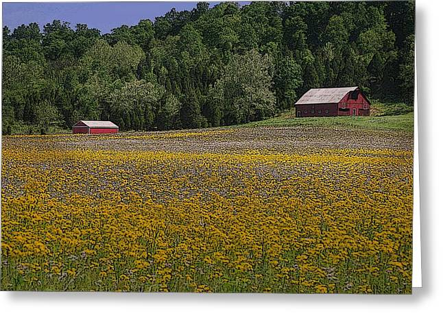 Southern Indiana Digital Art Greeting Cards - Spring Mustard and Barns Greeting Card by Rick DeCroes