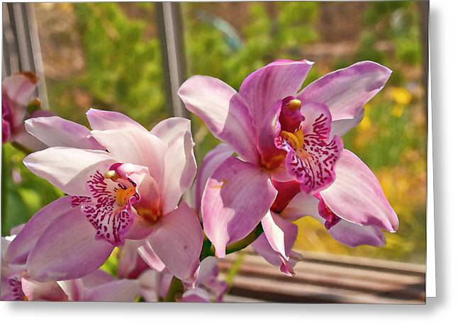 Appraisal Photographs Greeting Cards - Spring Orchids Photograph Greeting Card by Don  Wright