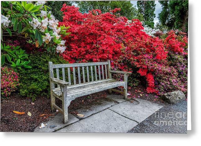 Red Petals Greeting Cards - Spring Park Bench Greeting Card by Adrian Evans