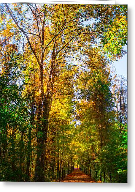 Serenity Landscapes Greeting Cards - Spring Path Greeting Card by Parker Cunningham