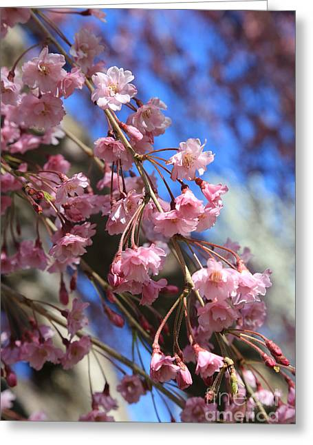 Spring Pink Blossoms On Blue Greeting Card by Carol Groenen