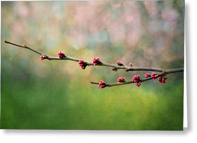 Youth Digital Greeting Cards - Spring Redbud Greeting Card by Moon Stumpp