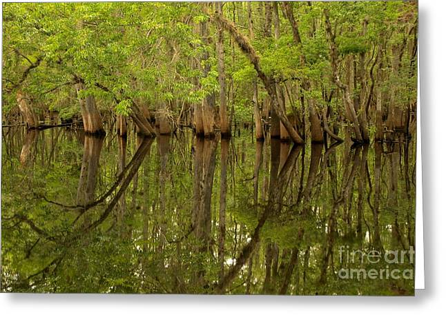 Manatee Springs Greeting Cards - Spring Reflections At Manatee Springs Greeting Card by Adam Jewell