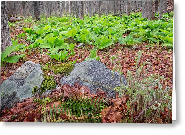 Forest Floor Greeting Cards - Spring Renewal Greeting Card by Bill Wakeley