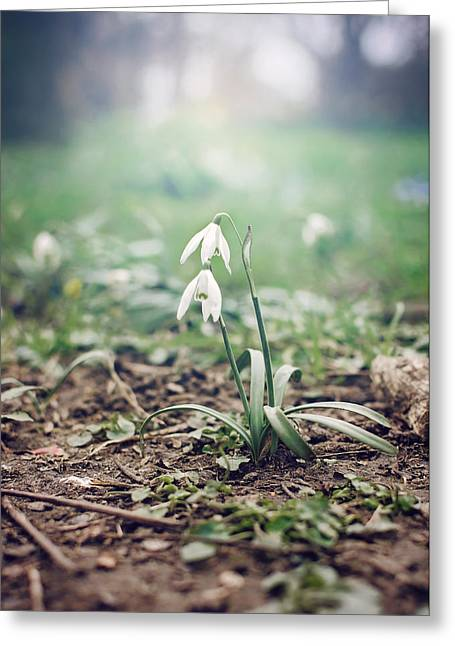 Tiny Whites Greeting Cards - Spring Rising Greeting Card by Heather Applegate