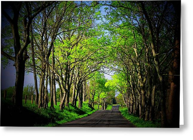 Northern Virginia Greeting Cards - Spring Road in Virginia Greeting Card by Joyce Kimble Smith
