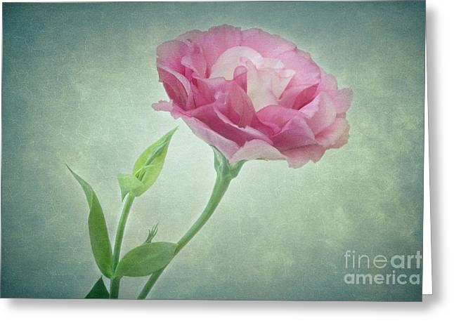 Angelini Greeting Cards - Spring Ruffles Lisianthus visit www.AngeliniPhoto.com for more Greeting Card by Mary Angelini