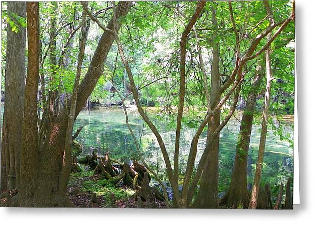 Chiefland Greeting Cards - Spring Run Woods I Greeting Card by Sheri McLeroy