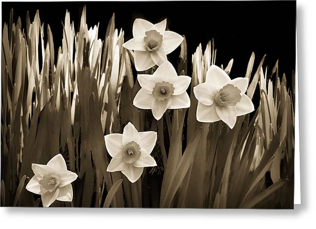 Brown Tones Greeting Cards - Spring - Sepia Greeting Card by Nikolyn McDonald