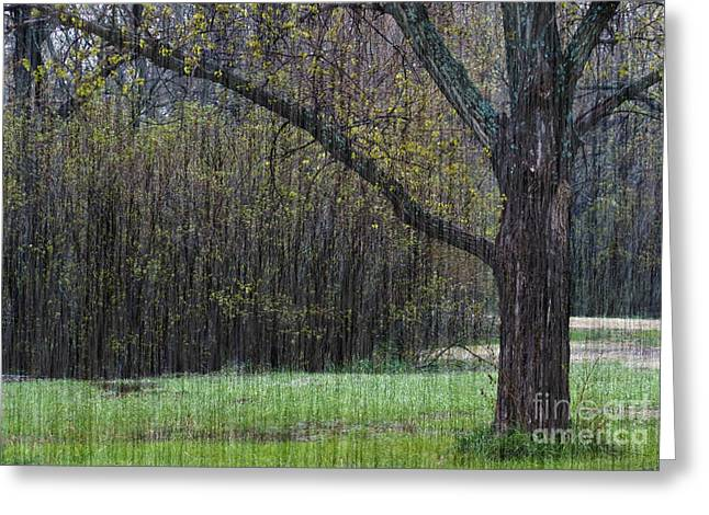 Thunderstorm Greeting Cards - Spring Shower Greeting Card by Fred Lassmann