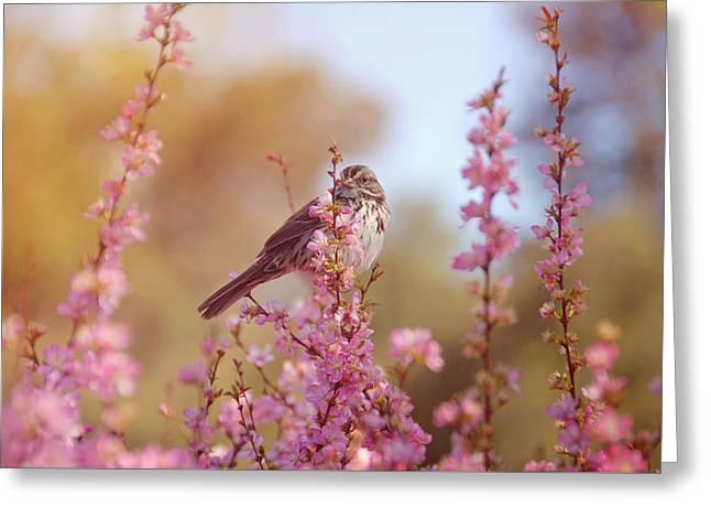 Discern Greeting Cards - Spring Sparrow Greeting Card by Lynn Bauer