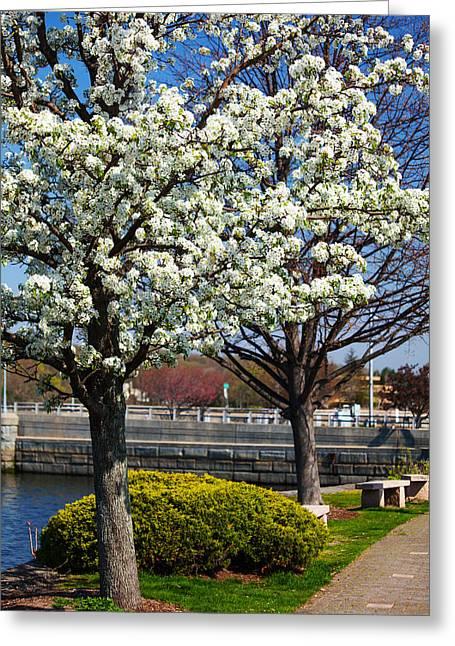 Spring Time In Westport Greeting Card by Karol Livote