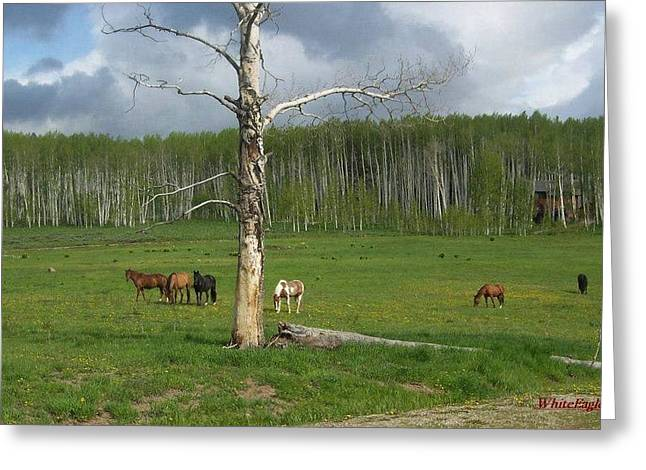 Shower Head Greeting Cards - Spring Time Pastures Greeting Card by Layne Frentz