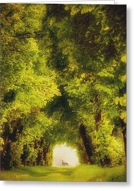 Poland Greeting Cards - Spring Time Greeting Card by Piotr Krol (bax)