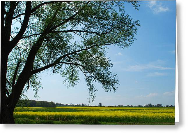 Lanscape Greeting Cards - Spring Time. Greeting Card by Terence Davis