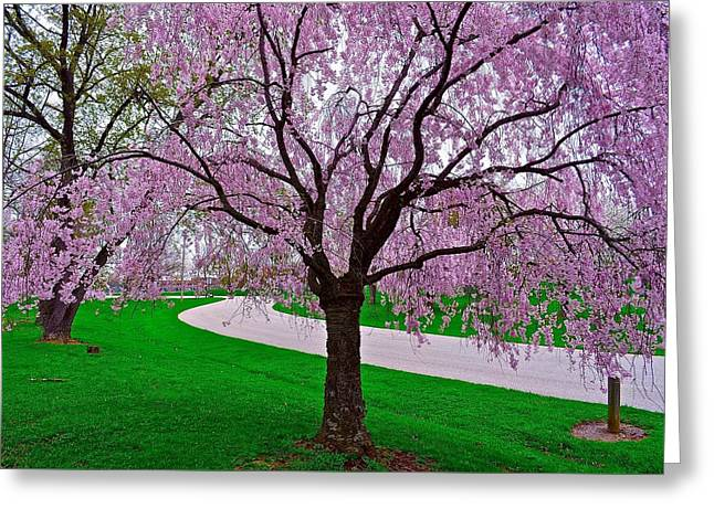 Warm Summer Greeting Cards - Spring to Life Greeting Card by Frozen in Time Fine Art Photography