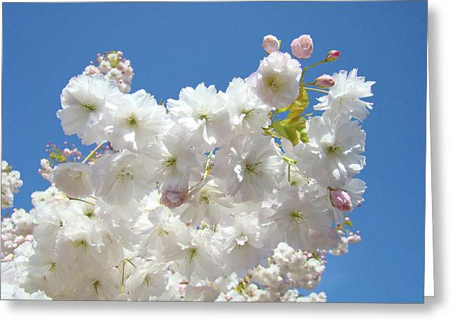 Pink Blossoms Greeting Cards - Spring Tree Blossoms art prints Bright Blue Sky Baslee Troutman Greeting Card by Baslee Troutman