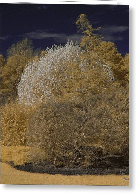 Paulette Wright Digital Art Greeting Cards - Spring Trees - Infrared Greeting Card by Paulette B Wright