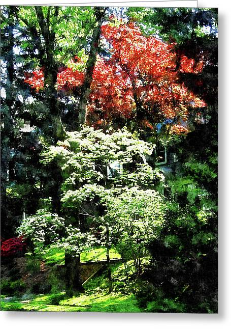 Flowering Trees Greeting Cards - Spring Trees Greeting Card by Susan Savad