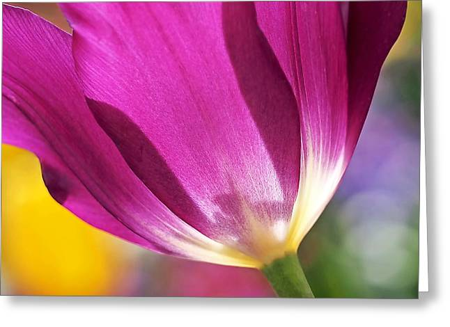 Bright Pink Greeting Cards - Spring Tulip - Square Greeting Card by Rona Black