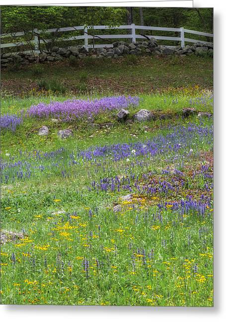 Stone Fence Greeting Cards - Spring Wildflowers Greeting Card by Bill Wakeley