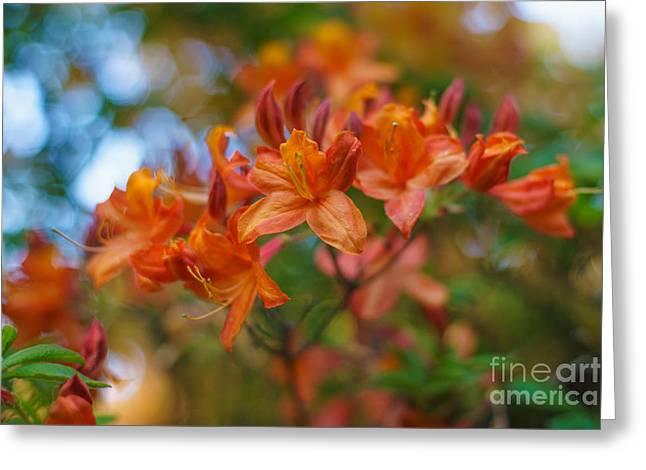 Springs Azaleas Colors Greeting Card by Mike Reid