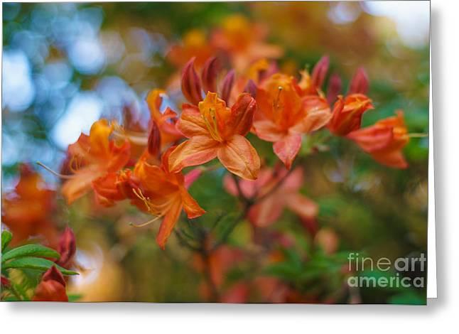 Pistils Greeting Cards - Springs Azaleas Colors Greeting Card by Mike Reid