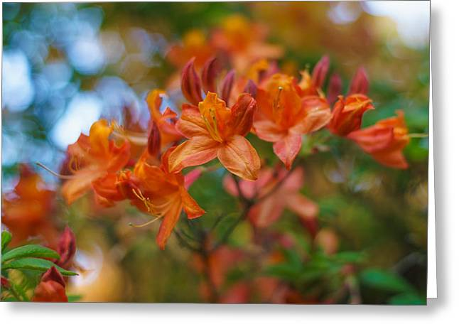 Stamen Greeting Cards - Springs Azaleas Colors Greeting Card by Mike Reid