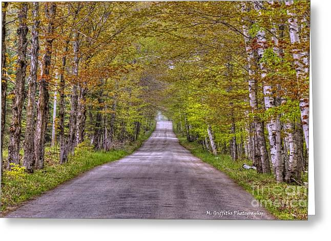 Roadway Greeting Cards - Springtime Canopy Greeting Card by Mike Griffiths