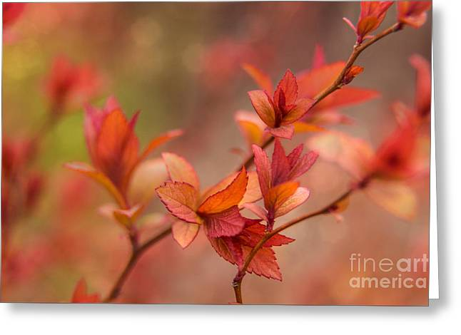 Maine Spring Greeting Cards - Springtime Colors Greeting Card by Karin Pinkham