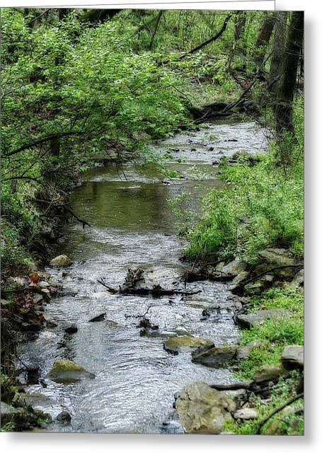 Nature Center Greeting Cards - Springtime Creek Greeting Card by Corey Haynes