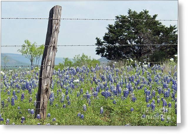 Cedar Fence Greeting Cards - Springtime For Texas Greeting Card by Joe Jake Pratt