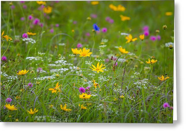Daucus Greeting Cards - Springtime Frenzy Greeting Card by James Barber