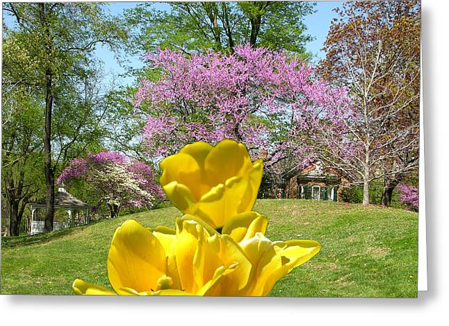 Red Bud Trees Greeting Cards - Springtime in Bridgeton Missouri Greeting Card by John Lautermilch