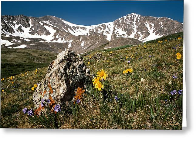 Springtime In The Rockies Greeting Card by Joe Bonita