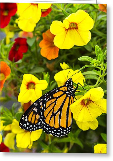 Monarchs Greeting Cards - Springtime Monarch Greeting Card by Garry Gay