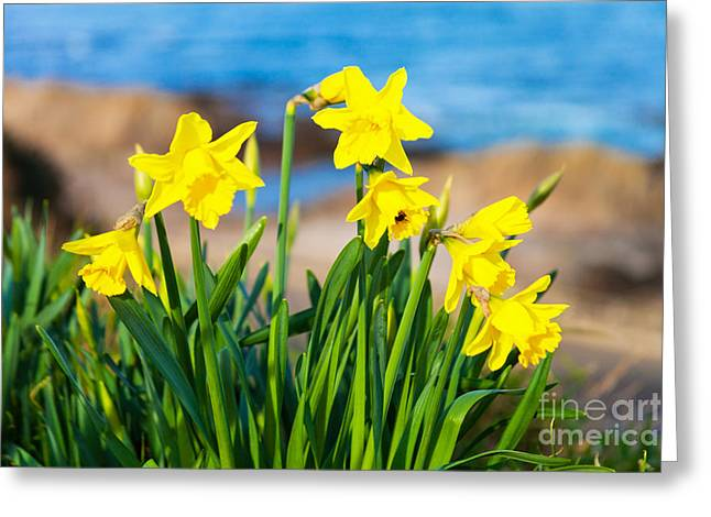 Close Focus Nature Scene Greeting Cards - Springtime On The Brae Greeting Card by Diane Macdonald